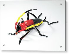 Beetle Acrylic Print by Tomasz Litwin