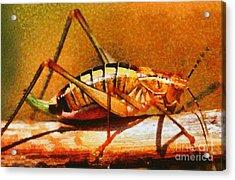 Grasshopper Acrylic Print by George Atsametakis