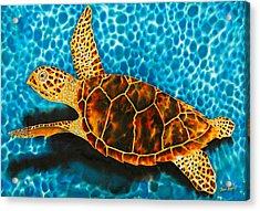 Green Sea Turtle Acrylic Print by Daniel Jean-Baptiste