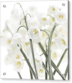 Lily-of-the-valley Flowers  Acrylic Print by Elena Elisseeva