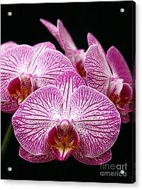 Moth Orchid Acrylic Print by James Brunker