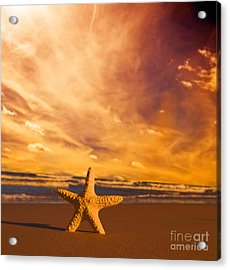 Starfish On The Beach At Sunset Acrylic Print by Michal Bednarek