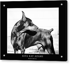 Watchful Acrylic Print by Rita Kay Adams