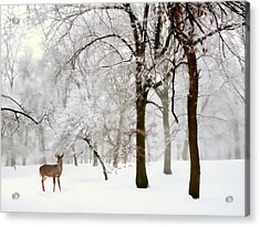 Winter's Breath Acrylic Print by Jessica Jenney