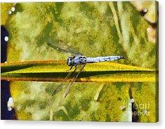 Dragonfly Acrylic Print by George Atsametakis