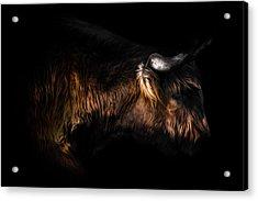 Highland Cow Acrylic Print by Ian Hufton