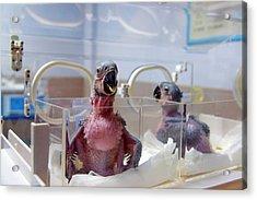 Safari Park Animal Hospital Acrylic Print by Pan Xunbin
