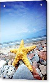 Starfish Acrylic Print by Michal Bednarek