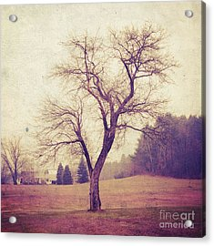 Tree Acrylic Print by HD Connelly