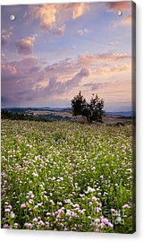 Tuscany Acrylic Print by Brian Jannsen