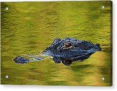 Usa, Florida, St Acrylic Print by Jaynes Gallery