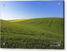 Agricultural Landscape. Auvergne. France. Acrylic Print by Bernard Jaubert
