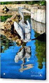 Pink Backed Pelican Acrylic Print by George Atsametakis