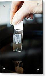 Sperm Whale Tissue Analysis Acrylic Print by Thomas Fredberg