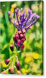 Spring Wild Flower Acrylic Print by George Atsametakis
