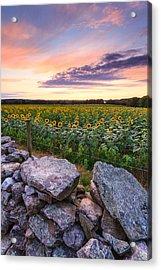 Sunflower Sunset Acrylic Print by Bryan Bzdula