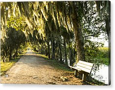 A Bench Under Golden Spanish Moss Acrylic Print by Ellie Teramoto