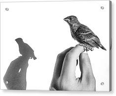 A Bird On The Hand Acrylic Print by Caitlyn  Grasso
