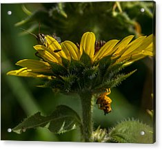 A Bugs World Acrylic Print by Ernie Echols