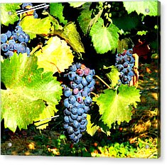 A Bunch Of Grapes Acrylic Print by Kay Gilley