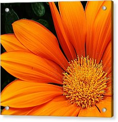 A Burst Of Orange Acrylic Print by Bruce Bley