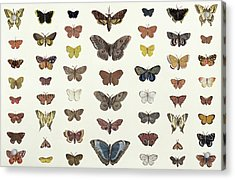 A Collage Of Butterflies And Moths Acrylic Print by French School