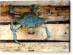 A Crab In A Wooden Box Acrylic Print by Olga R