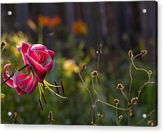 A Day In The Life Acrylic Print by Mary Amerman