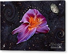 A Daylily Bloom Rockets To The Moon Acrylic Print by ImagesAsArt Photos And Graphics