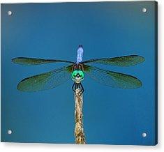 A Dragonfly IIi Acrylic Print by Raymond Salani III