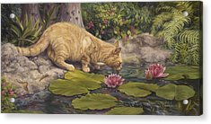 A Drink At The Pond Acrylic Print by Lucie Bilodeau