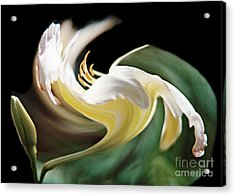 A Drunk Daylily Bloom Acrylic Print by ImagesAsArt Photos And Graphics