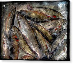 A Fine Catch Of Trout - Steel Engraving Acrylic Print by Barbara Griffin