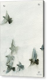A Flock Of Pigeons 1 Watercolor Painting Of Birds Acrylic Print by Beverly Brown