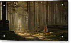 A Forest Walk Acrylic Print by Jan Paul Kraaij