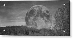A Friend At Night Acrylic Print by Betsy C Knapp