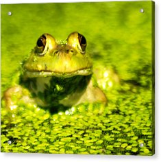 A Frogs Day Acrylic Print by Optical Playground By MP Ray