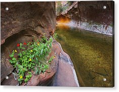 A Frogs Rest Acrylic Print by Peter Coskun