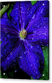 A Gentle Rain Acrylic Print by Frozen in Time Fine Art Photography