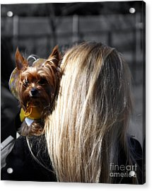 A Girl And Her Dog Acrylic Print by Steven  Digman