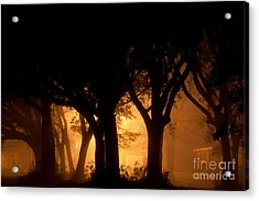 A Grove Of Trees Surrounded By Fog And Golden Light Acrylic Print by Jo Ann Tomaselli