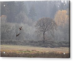 A Hawk's Paradise Acrylic Print by Angie Vogel