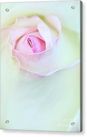A Hint Of Pink Acrylic Print by Sabrina L Ryan
