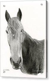 A Horse Of Course Acrylic Print by Sarah Batalka