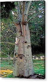 A Lifetime Of Scars Acrylic Print by Terry Reynoldson