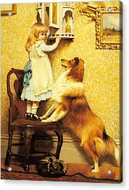 A Little Girl And Her Sheltie Acrylic Print by Charles Burton Barber