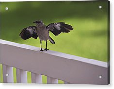 A Little Visitor Northern Mockingbird Acrylic Print by Terry DeLuco