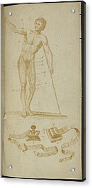 A Medical Diagram Of A Naked Man Acrylic Print by British Library