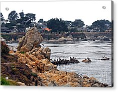 A Misty Day At Pacific Grove Acrylic Print by Susan Wiedmann