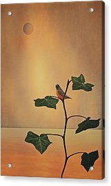 A Moment Of Zen Acrylic Print by Tom York Images